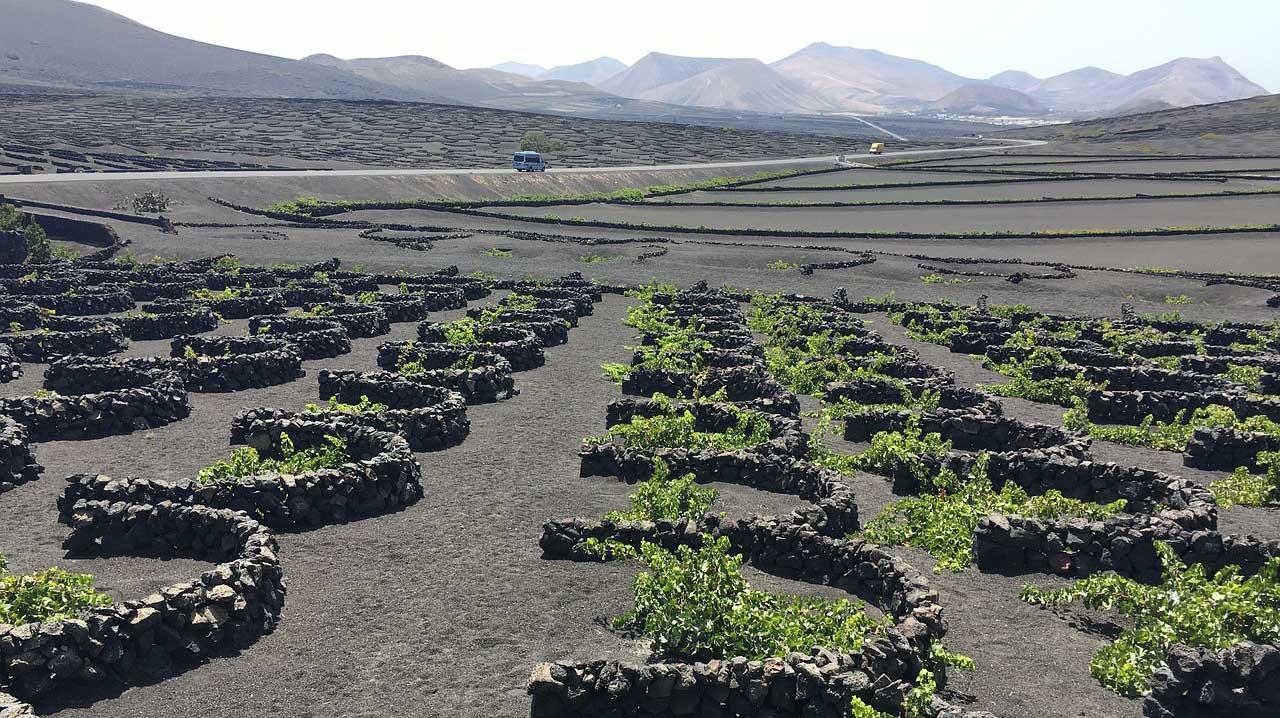 Región vinícola de La Geria
