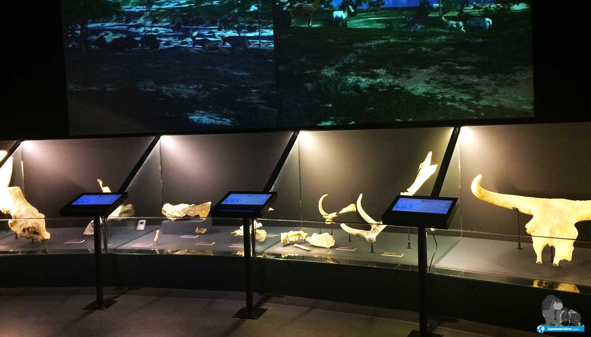 "Sala de la Prehistoria "" Museo de San Isidro de Madrid """